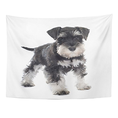 TOMPOP Tapestry Black Puppy Miniature Schnauzer in Front of Dog Pet Home Decor Wall Hanging for Living Room Bedroom Dorm 60x80 Inches