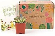 Succulent Subscription Boxes - 1 Succulent/Month