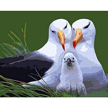 Diy Pintura Por Números Albatros Familia Para Colorear Por Números
