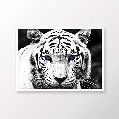 White tiger, tiger, Bengal tiger, animals, wild life - IKEA