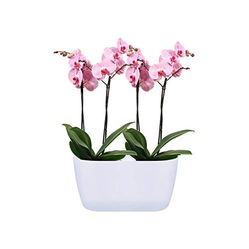 Elho Brussels Orchid Duo 25 - Flowerpot - White - Indoor - Ø 25 x H 12.6 cm