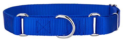 Royal Blue Dog Collar - 8