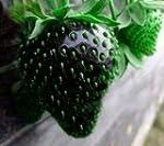 Black Strawberry Seeds -Lower in Suga...
