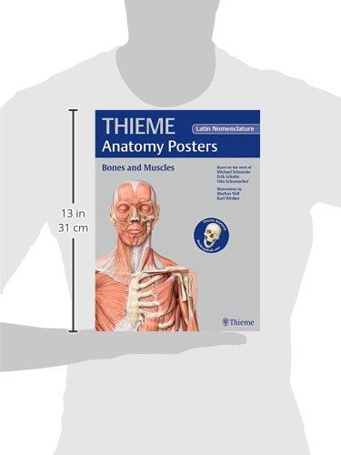 Thieme Anatomy Posters Bones And Muscles Latin Nomeclature Amazon