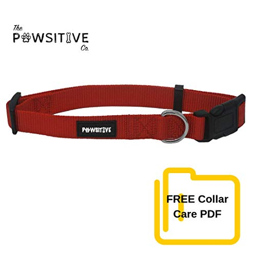 Dog Collar, Buy a Collar. Feed a Dog. The Pawsitive Co Durable Nylon Puppy and Dog Collar with Chrome Plated D Ring - Small - Red (Collar Dog Nylon Puppy)