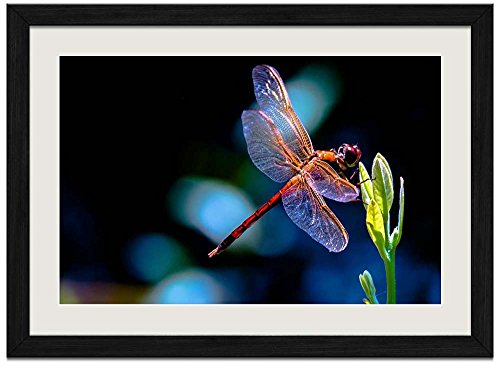 Dragonfly - Art Print Wall Black Wood Grain Framed Picture(24x16inch)