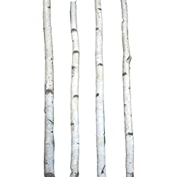 Four Thin White Birch Poles 8 ft