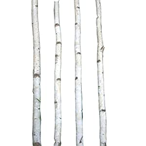 Four Thin White Birch Poles 8 ft 10