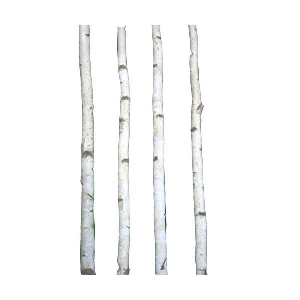 Four-Thin-White-Birch-Poles-8-ft