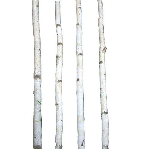 Four Thin White Birch Poles 4 Ft