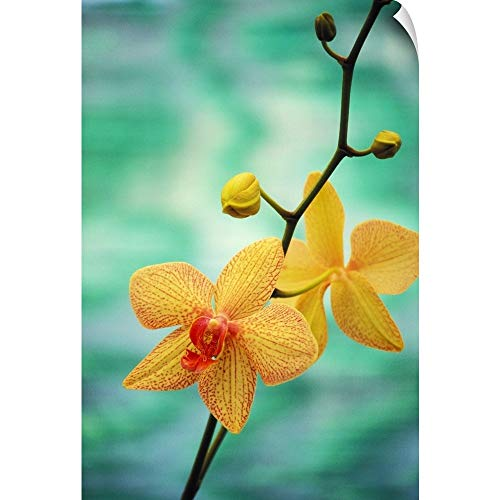 Allan Seiden Wall Peel Wall Art Print Entitled Hawaii, Yellow Dendrobium with Orange Speckles, Orchid Flower On Plant 12