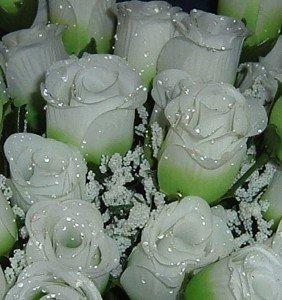 84 Silk Rose Flowers W Raindrops