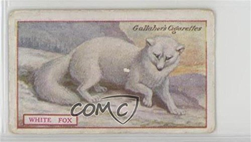 White Fox Ungraded COMC Good to VG-EX (Trading Card) 1921 Gallaher Animals & Birds of Commercial Value - Tobacco [Base] #73 from Gallaher Animals & Birds of Commercial Value