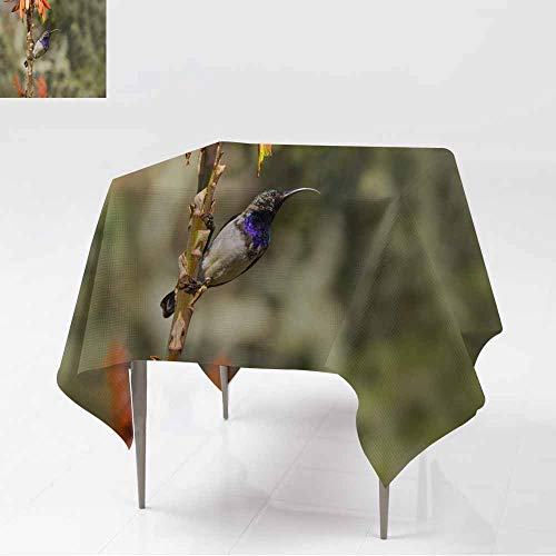 AFGG Tablecloth for Kids/Childrens,Amethyst Sunbird Against a Lovely Colorful Background,Dinner Picnic Table Cloth Home Decoration,50x50 Inch ()