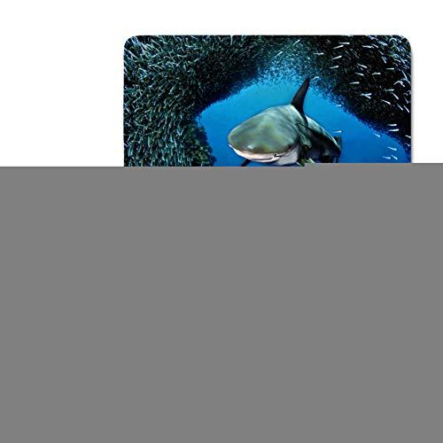 HUGS IDEA Cool Shark 3 Piece Bath Rug Set Blue Ocean Print Toilet Seat Cover Bath Mat Lid -