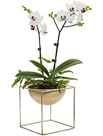 Shop Amazon.com   Decorative Bowls