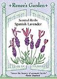Lavender, Spanish