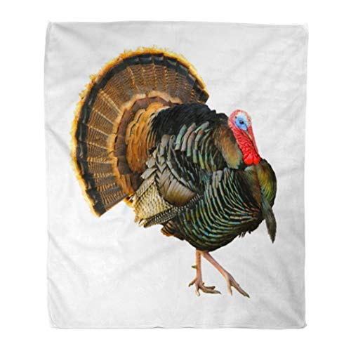 Emvency Throw Blanket Warm Cozy Print Flannel Turkey Tom Strutting His Stuff Red Wattles and Blue White Head Over Comfortable Soft for Bed Sofa and Couch 60x80 Inches