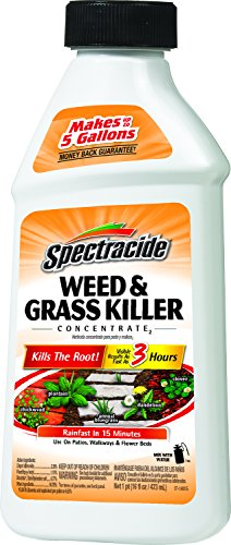 Spectracide Weed & Grass Killer Concentrate2 (HG-66001) (16 fl oz) (Spectracide Weed And Grass Killer)
