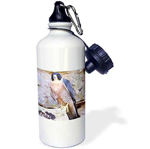 3dRose wb_83859_1 New Caledonia Crested Geckos, Lizard-Na02 Dno0243-David Northcott Sports Water Bottle, 21 oz, White