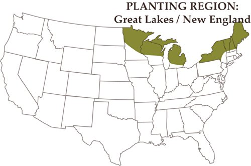 Nature's Seed 1.5 Acre Great Lakes/New England Horse Pasture Blend by Nature's Seed (Image #2)
