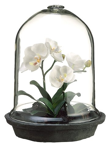 allstate-floral-phalaenopsis-orchid-plant-in-a-glass-terrarium-12