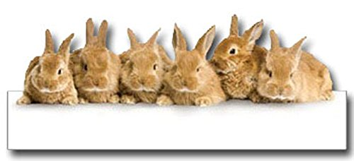 PAPER HOUSE PPHCDC.496 Die Cut Card Row of Bunnies ()