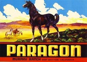 MAGNET East Whittier Murphy Ranch Paragon Horse Lemon Citrus Fruit Crate Magnet Print