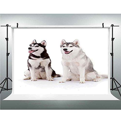 - Alaskan Malamute,Less Crease Vinyl Wedding Backdrop Background for Wedding, Baby, Newborn, Personal Photo,10x10ft,Furry Arctic Doggies Husky Whelp Pedigree Pet Happy Siberian Mammal Decorative
