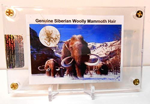 - Genuine Fossil Siberian Woolly Mammoth Hair with Free Acrylic Display & Stand, Fact Sheet & COA Bundle
