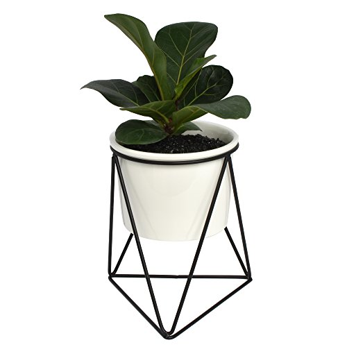 r Metal Iron Rack Black with Small White Ceramic Decorative Planter Pot for Succulents Herbs Cactus Artificial Plants Flower Industrial Modern Centerpiece for Coffee Table ()