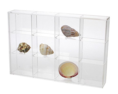 Seashell Display Case - Medium 12 Compartments by SAFE