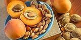 Bitter Apricot Kernels, 1 pound, 750 Raw Apricot