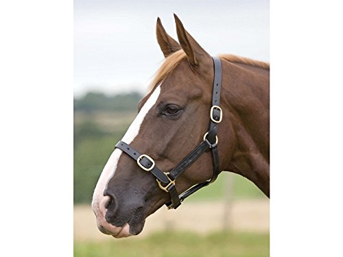Shires Blenheim Fully Adjustable Leather Headcollar-Black Yearling