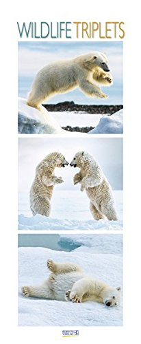 Wildlife Triplets 2018: Schmaler Wandkalender. Foto-Kunstkalender von Tieren in der Natur und im Meer. PhotoArt Vertikal. 28,5 x 69 cm. Edles Foliendeckblatt.