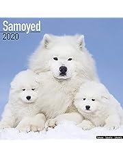 Samoyed Calendar 2020