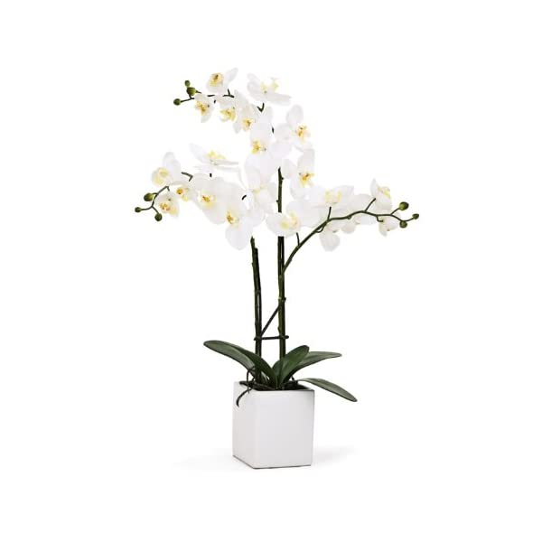 Torre & Tagus 1684-100030 Orchid Potted Triple Stem, 23-Inch, White
