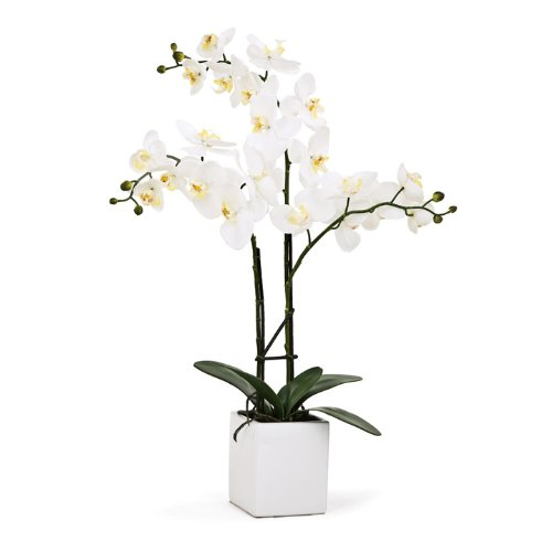 Torre & Tagus 1684-100030 Orchid Potted Triple Stem, 23-Inch, White -
