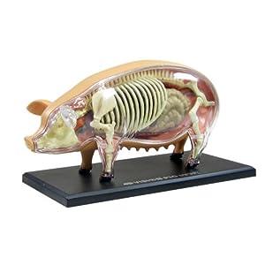 スカイネット 立体パズル 4D VISION 動物解剖 No.01 豚解剖モデル