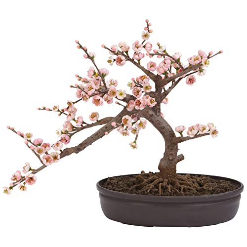 Nearly Natural 4764 Cherry Blossom Bonsai Artificial Tree, Pink (Renewed)