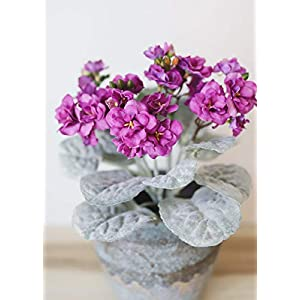 "Violet Fuchsia Faux African Violet Plant - 12"" Tall 11"