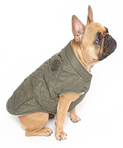 Kanada Wachhund, Stadtbild Coat
