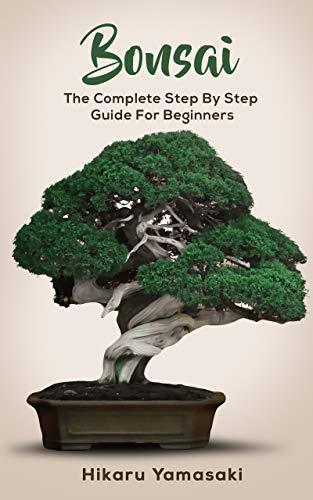 Buy bonsai tree for beginners