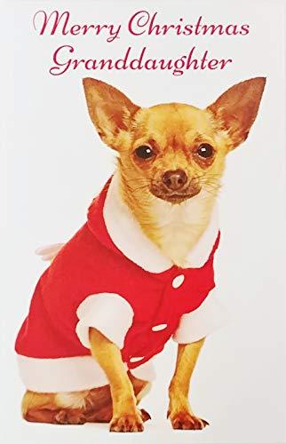Merry Christmas Granddaughter Greeting Card w/Santa Chihuahua Dog