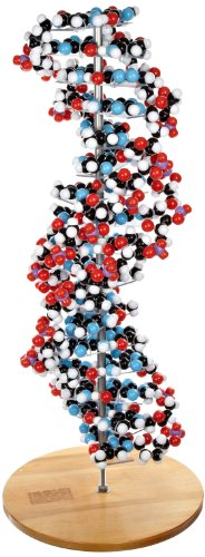 Molecular Models 14-DNA2700C 17 Base Pair DNA Model Kit, Completely (Dna Molecular Model)