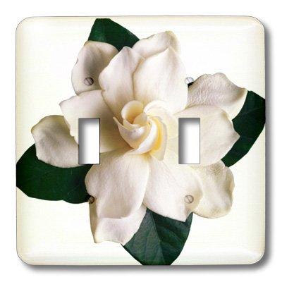 3dRose lsp_16811_2 Gardenia Toggle Switch - Gardenia Clock Plate