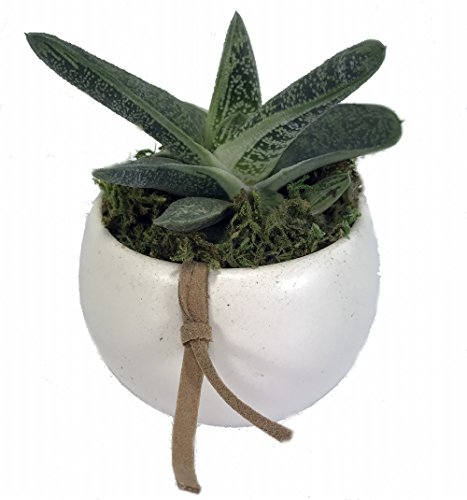 Leather Accent Planter - 4