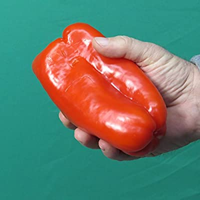 *Rare*SWEET* GIANT PERUVIAN PEPPERS *7 seeds*#1101