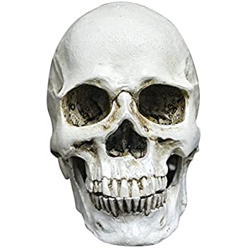 fashionclubs halloween resin replica human skull head gothic decoration prop - Halloween Skeleton Head