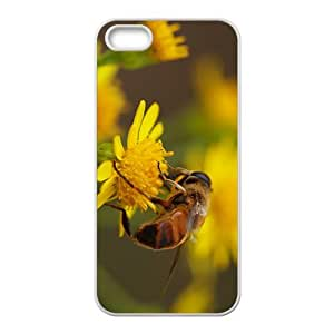 Coccinella Septempunctata Hight Quality Plastic Case for Iphone 5s by Maris's Diary